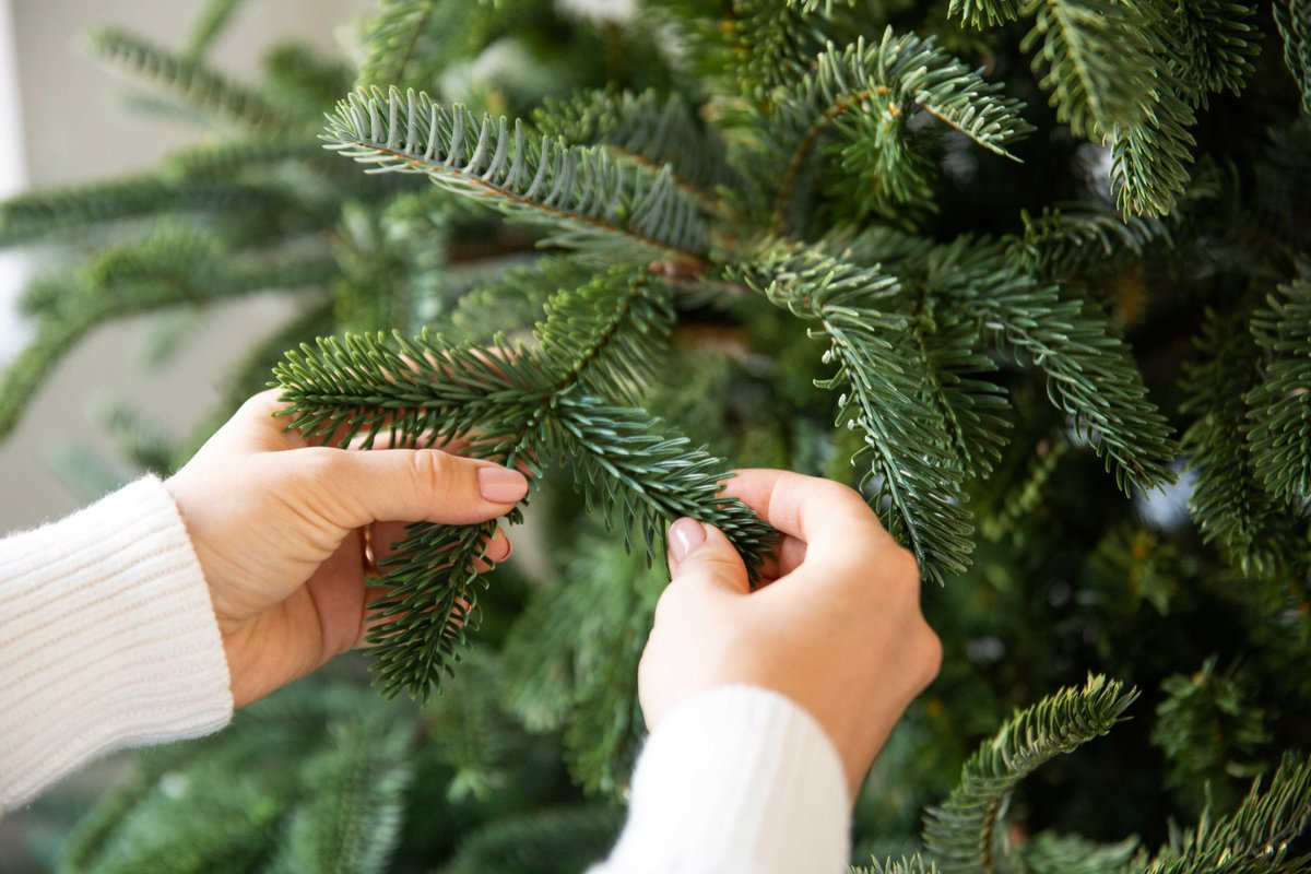 Don T Miss This Chance To Get Up 40 Off On Realistic Christmas Trees Take Advantage Of Our Last Minute Deals Http Bit Ly 2ulfe3w Balsamhill
