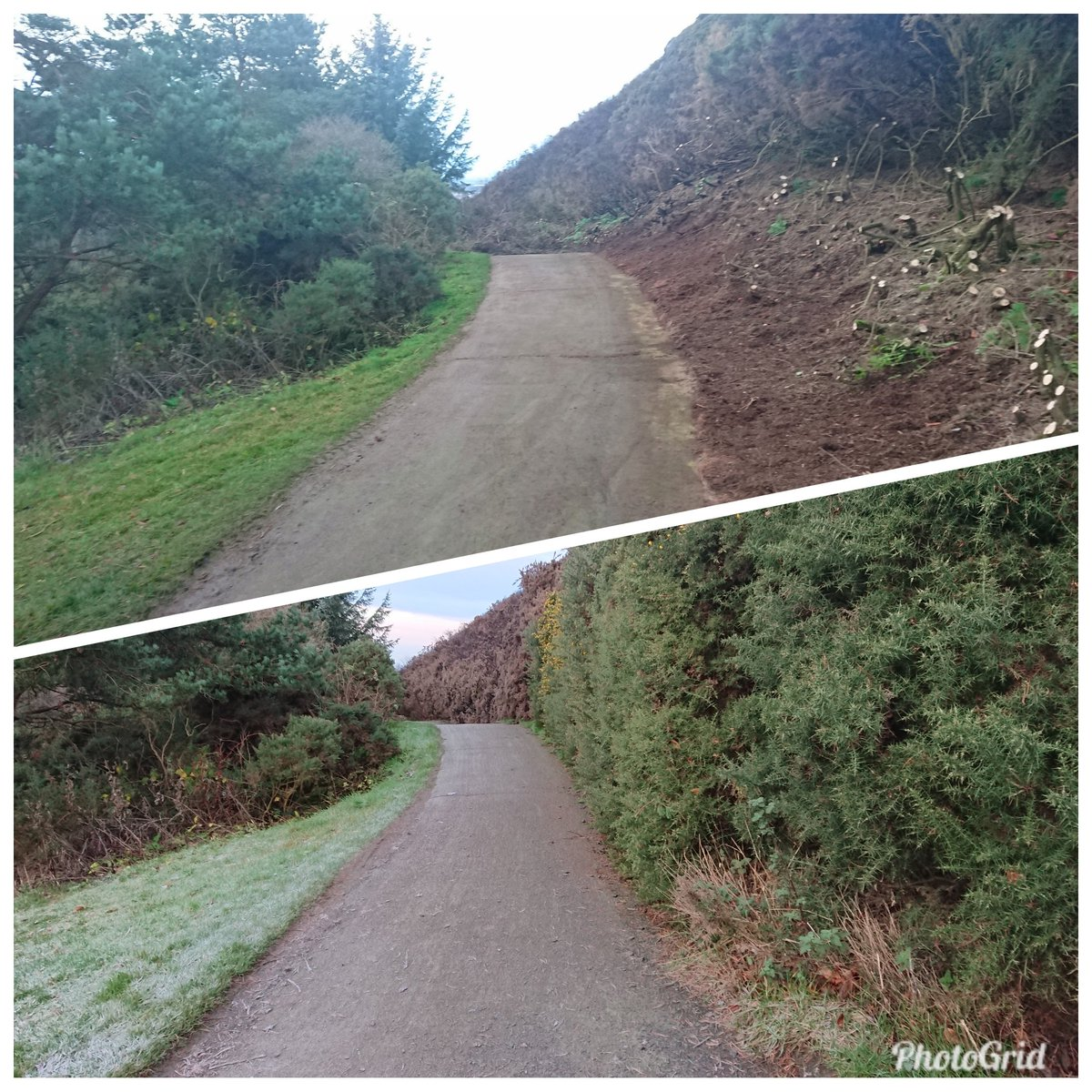 test Twitter Media - The cold temperatures have been ideal for us to tidy up the path towards 18th, making it less enclosed and claustrophobic. Least I will find my walk to the tee more enjoyable now, before I ruin it by losing my tee shot in the gorse to the right. https://t.co/bWYF7fLyAS