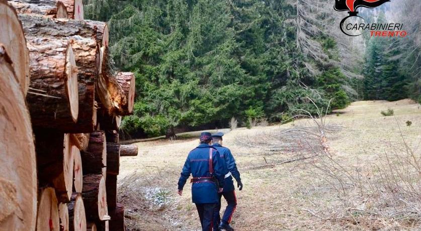 Muore nel bosco, il titolare sposta il corpo e lo ...
