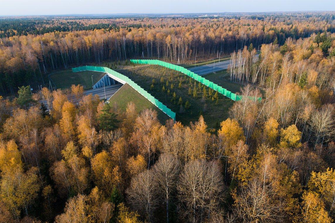 Мост для перехода диких животных через трассу построили на ЦКАД в Дмитровском округе