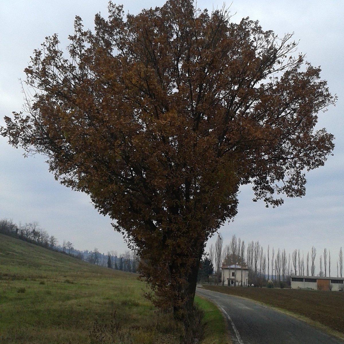 Gianmarcomacpez photo