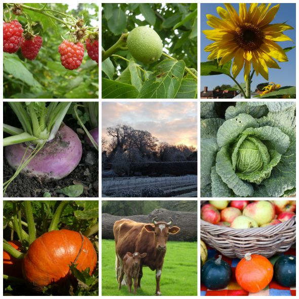 test Twitter Media - There's been loads of interest in the Waltham Place course for #organic and #biodynamic growing! Don't miss out on your place starting Jan 2019 https://t.co/rxgGGP21r1 https://t.co/4hFLlV7Gnp
