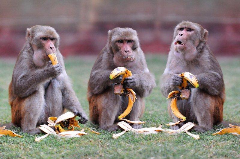 Для девочек, картинки смешных обезьян с надписями