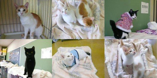 【昨日の人気記事】熊本市動物愛護センターが12月16日に緊急譲渡会を開催 成猫の数が収容能力の限界を超えたため https://t.co/ZirHCFvbOZ