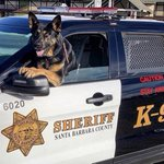 Image for the Tweet beginning: Happy Friday! Looks like K9