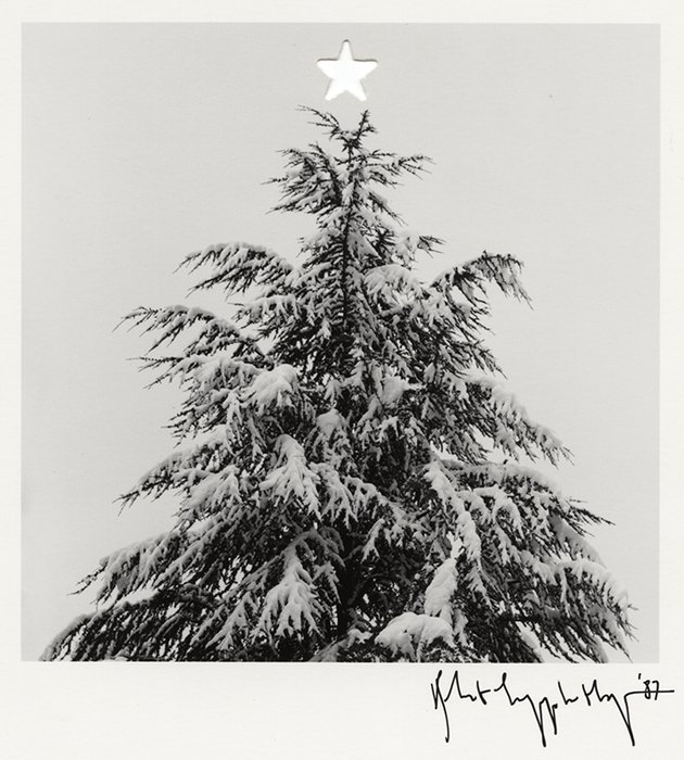 RT ICPhotog: 🎄 Portrait of an Xmas tree. 🎄 #FlashbackFriday 📷 Robert Mapplethorpe, 1987 #ICPCollections http://bit.ly/2Bt5z1u
