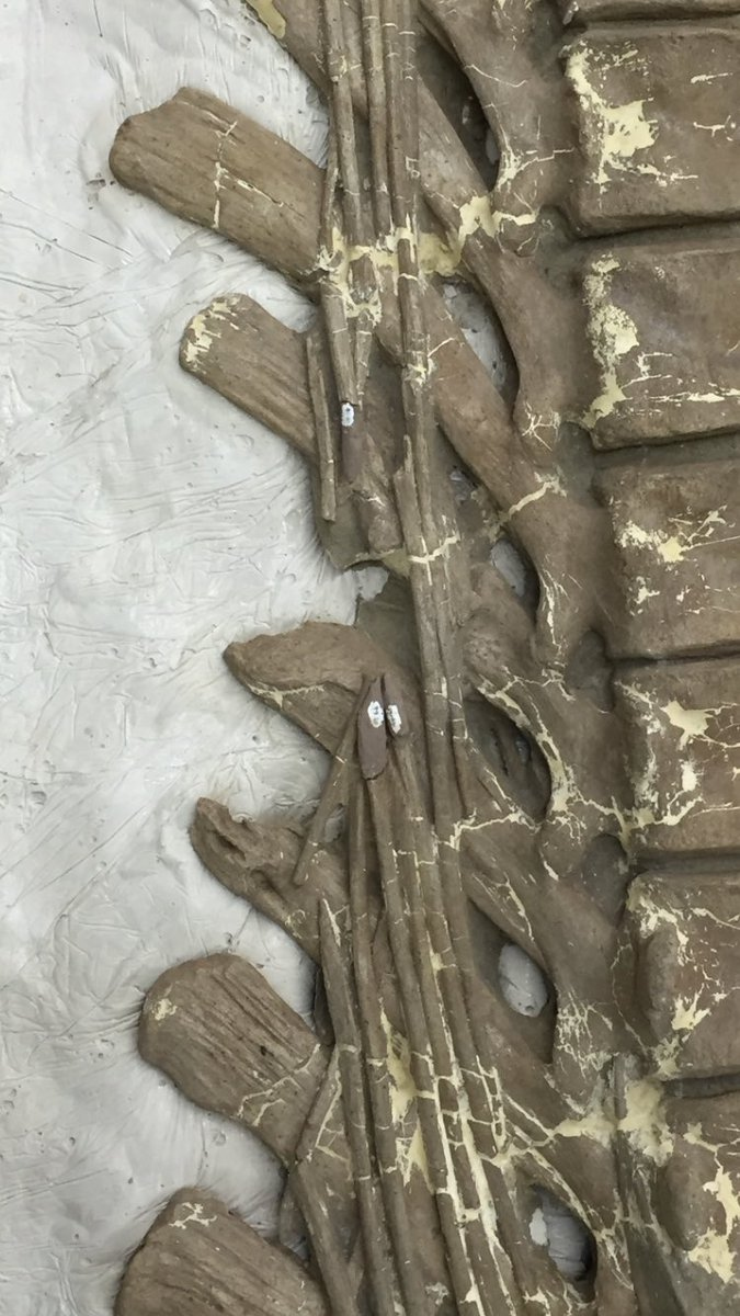 I get a kick out of the catch all explanation that dinosaur tail pathologies are the result of tyrannosaur predation. How about some other possibilities... Fallen trees, intercourse, aggressive displays, other dino's tripping over one sleeping? #FossilFriday #dinosaursarecool<br>http://pic.twitter.com/k2vNEoUF0R
