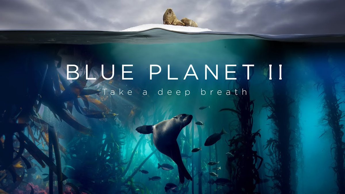 """Highly recommended viewing: @BBCEarth's """"Blue Planet II"""" on @netflix starting Sunday, Dec. 16. Crucial information and breathtaking photography."""
