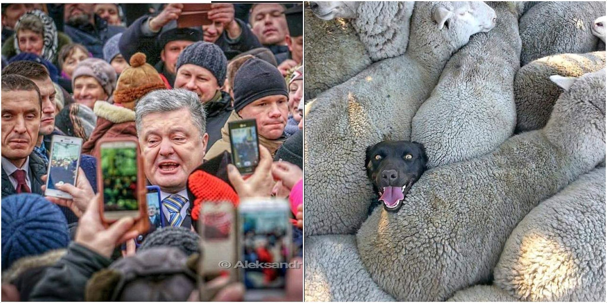 Порошенко оголосив про створення Об'єднаної української церкви - Цензор.НЕТ 5582