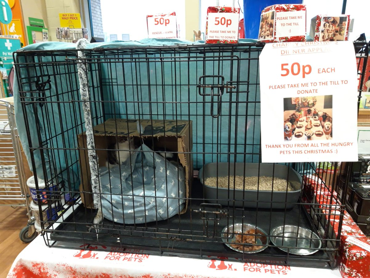 Keighley Cat Care On Twitter Pets At Home With Isaac And Ivy Come See Us