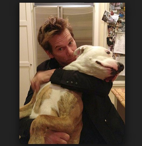 Stars Who Love Dogs .... Kevin Bacon and his Pitbull Kevin and his wife, Kyra Sedgwick, have two Pitties: Lilly and Rocky  #KevinBaconAndHisDogs #Pitbulls #MovieStarsAndDogs #PitbullLovers<br>http://pic.twitter.com/urL9q8pxlB