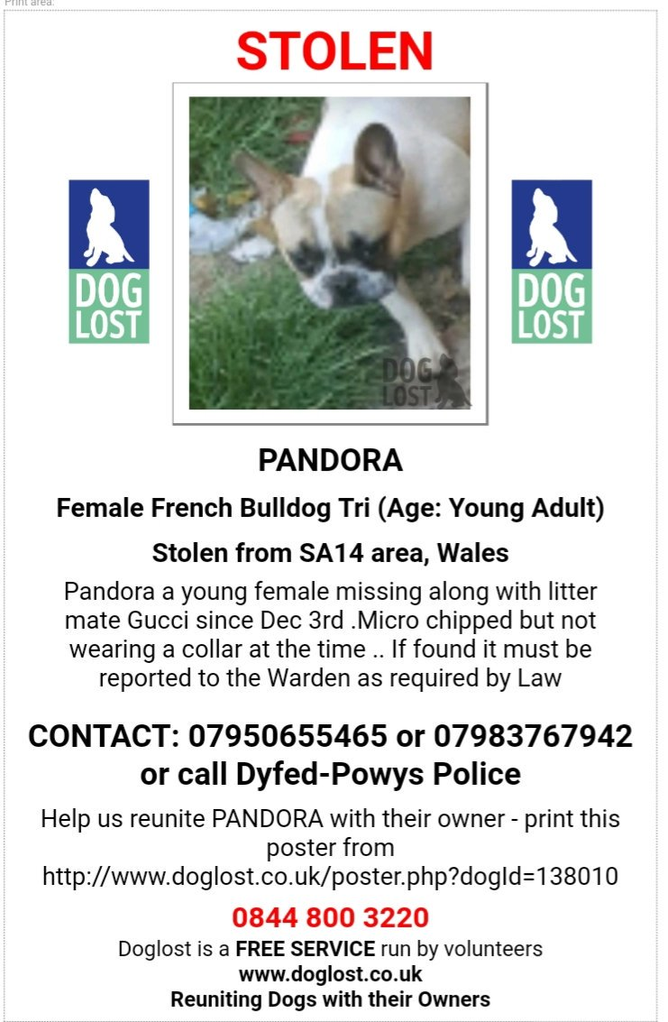 Stolen: GUCCI AND PANDORA  #French #Bulldog both Female considered #STOLEN #Penygroes #Llanelli #SA14 @DyfedPowys investigating #scanme #missingdog @DoglostUK #doglostuk #doglost #Dogtheft #Pettheftreform   http://www. doglost.co.uk/dog-blog.php?d ogId=138011 &nbsp; … <br>http://pic.twitter.com/16M2TQeoyr