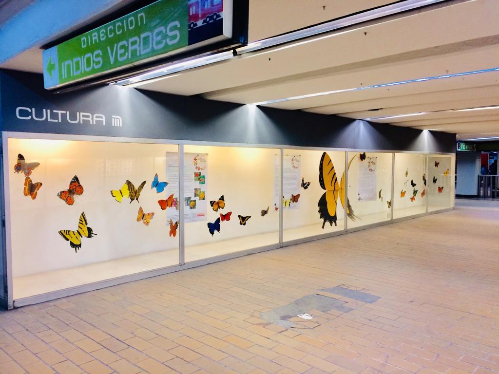 Resultado de imagen para Mariposas en la estacion coyoacan