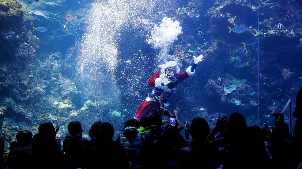 Scuba-diving Santa brings holiday cheer to fish, museumgoers https://t.co/5eWxU1nZGD