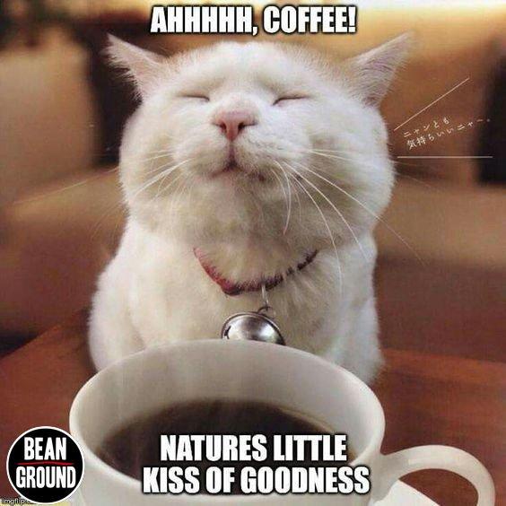 RT @MarkLovesCoffee: #coffee #espresso #barista https://t.co/yCw3R7PfVb