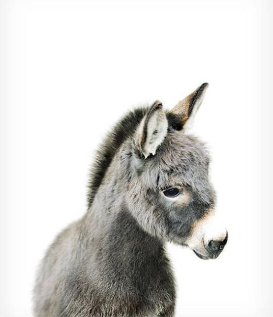 behold: a donk