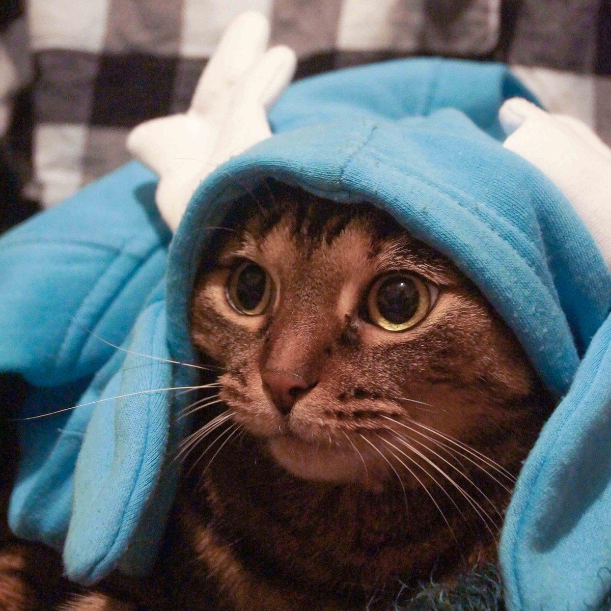 Amy Lee On Twitter 83 Angel Is A Blue Reindeer Angel Cat Kitty Kittycat Reindeer Blue Cute Adorable Baby Beauty Beautiful Pretty Girl Wonderful Precious Sweetie Cool Babygirl Cutecat Deer Christmas Xmas