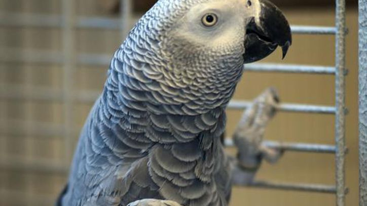 Foul-mouthed rescue parrot forges Amazon Alexa friendship https://t.co/v16IpKv5Cp