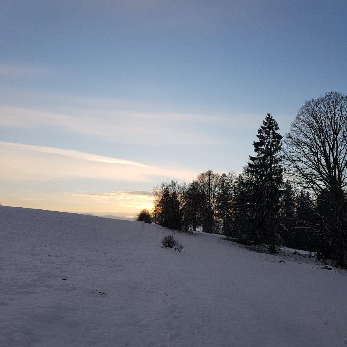 Waldhase5 On Twitter Guten Morgen Ihr Menschen 3 Advent