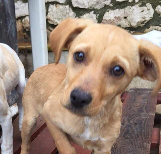 Left to die in mountains, sweet Snoopy is a lovely, gentle boy! He's learning to relax &amp; feel safe after their ordeal. Could you pls help find him safely &amp; love in a home in #uk #Germany #holland forever?  #adoptdontsshop #puppies #alldogsmatter #ADOPTABLE #puppy #puppylove <br>http://pic.twitter.com/qUx86N7PLq
