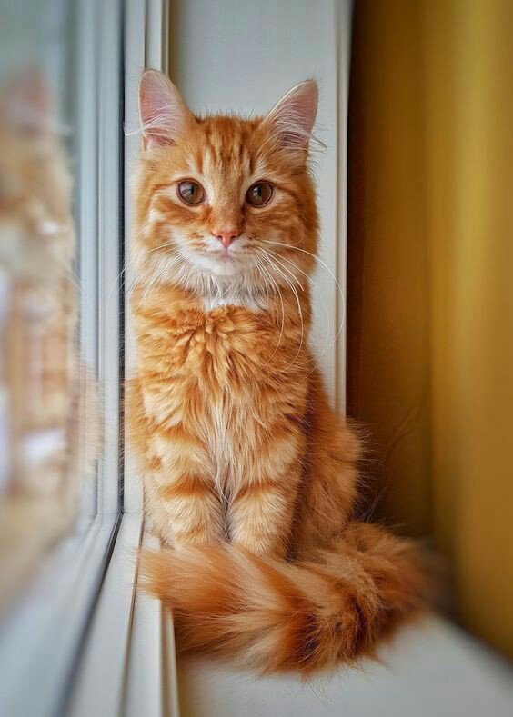 Do you love me? #cats #cat #catsofinstagram #kitty #kittens #kittensofinstagram #yellow