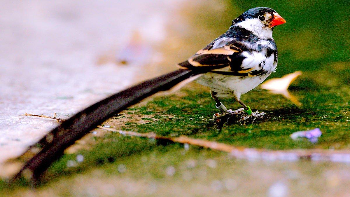 μεγάλο πουλί στα Ισπανικά μαύρη γκόμενα βίντεο