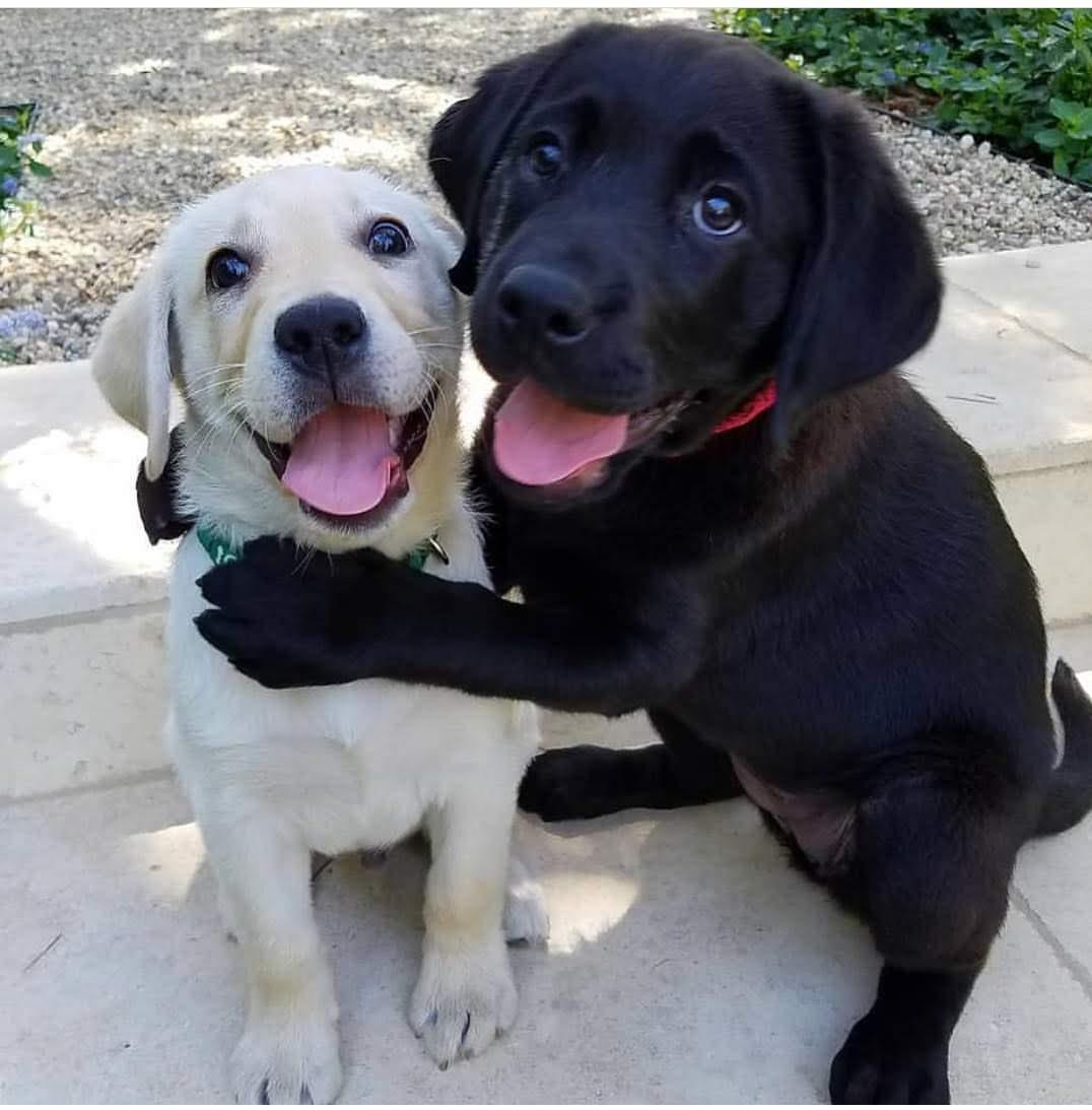 Love  lives here... #LoveACanine  #puppylove #puppies #dogbuddies  #dogcelebration #doglovers #dog #dogsoftwitter #dogslife <br>http://pic.twitter.com/3gehwNBKxz