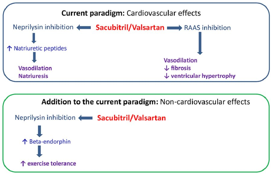 Sacubitril/Valsartan may have benefits beyond its known effects on the CV system. Data from animal models suggests that neprilysin inhibition may lead to increased nervous system levels of beta-endorphins which may explain increased exercise tolerance. https://www.onlinejcf.com/article/S1071-9164(18)31115-1/fulltext#sec0016…