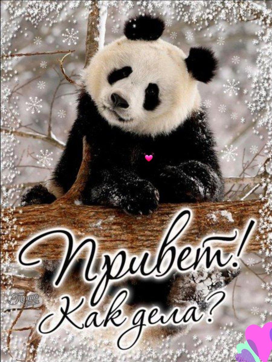 Открытка доброе утро панда