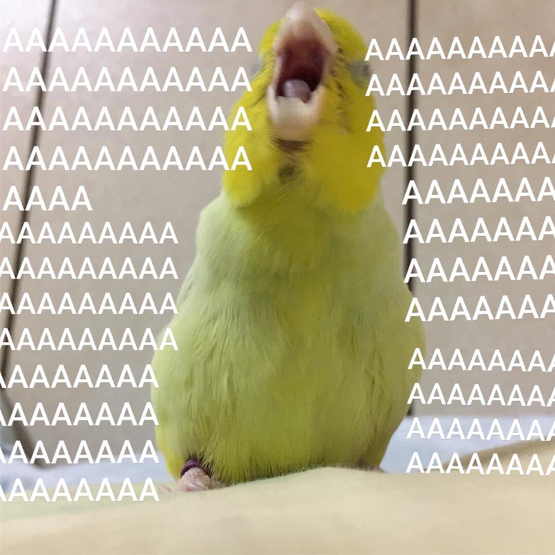 Настроение: Делать мемы со своей Джису🐦  *пользуйтесь,не благодарите* #parrot #parrots #мемы