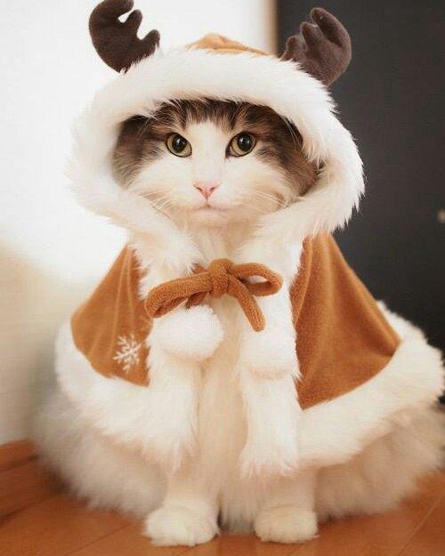 Am I cute? #cat #cats #CatsOfTwitter #catsofinstagram #cute