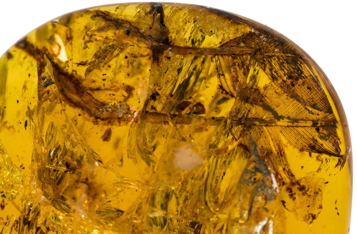100-million-year-old bird feather found in an amber in Myanmar. It dates back to an age when certain types of dinosaur evolved into birds. Read more: https://t.co/bqyNY2JpXM