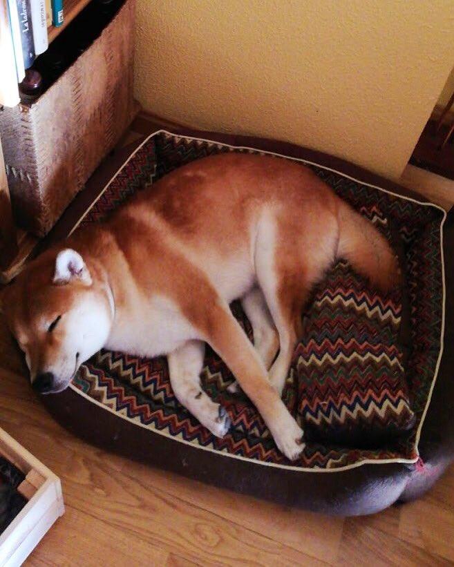 Ssh, Kenzo is sleeping <br>http://pic.twitter.com/rVEtVgcVQo