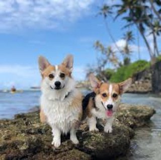 Corgi travaling to anather place. #puppy #puppies #pup #doglovers #felizdoingo  #puppylove <br>http://pic.twitter.com/w2PbrgpGf4