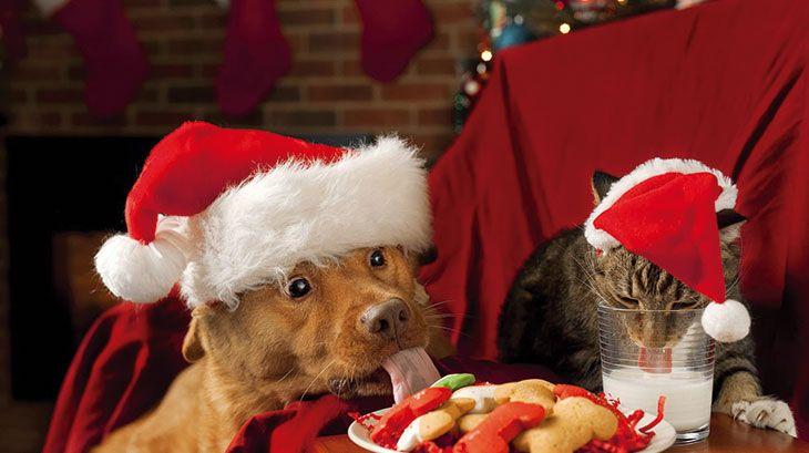 Tips para mantener a nuestras mascotas felices en Navidad  https://t.co/LUmFFQ9Fz7 https://t.co/7xrjC1necb