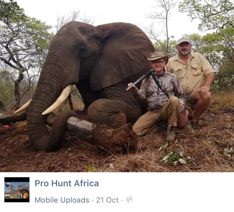 The professional hunter on the right loves to post his videos on YouTube. Here he is with the little twerp who killed this stunning elephant. The poor animal cried out in pain when the first shot hit. This is how humans with dead souls and evil hearts look. @Protect_Wldlife