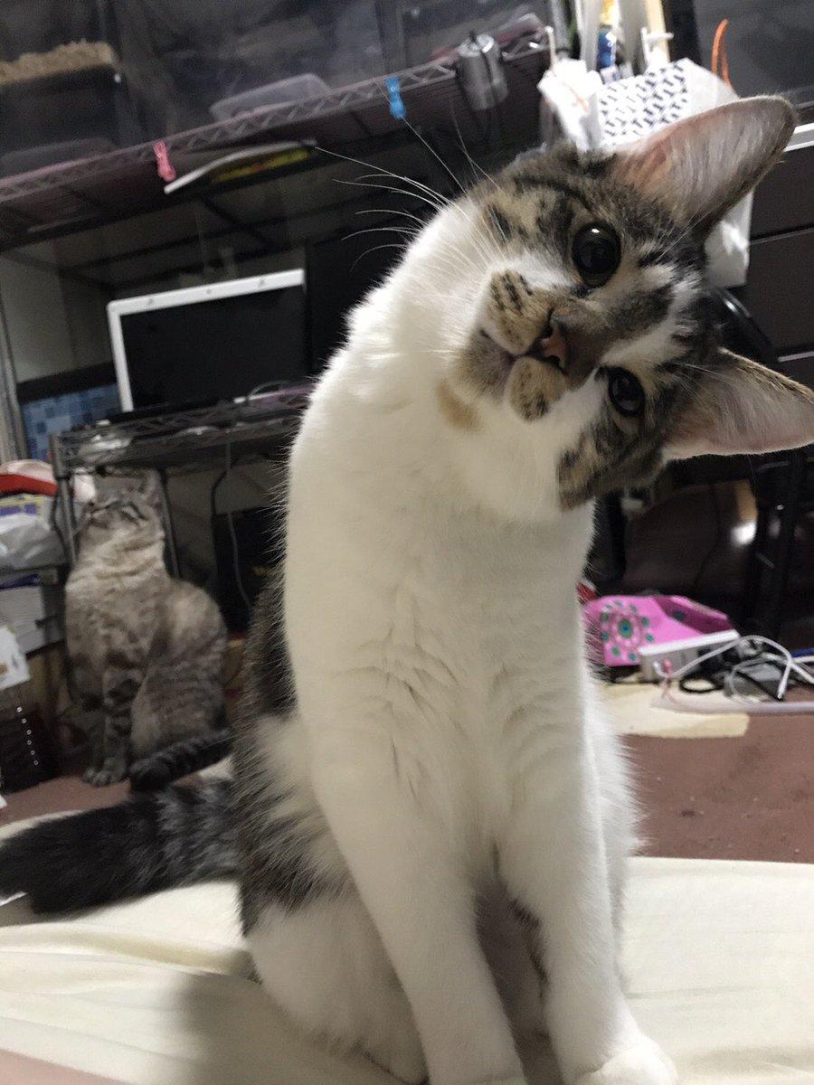 目猫カラス@来年2月からの絵仕事募集中さんの投稿画像