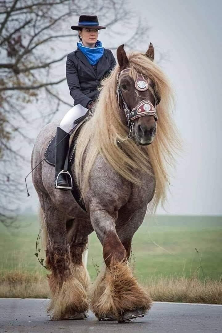 Смешные картинки про лошадиную силу, красавчик красавец пасхой