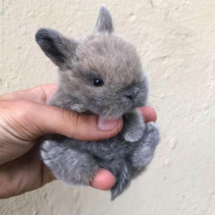 if you need cheering up today here's a tiny bunny baby to brighten your day ☀️