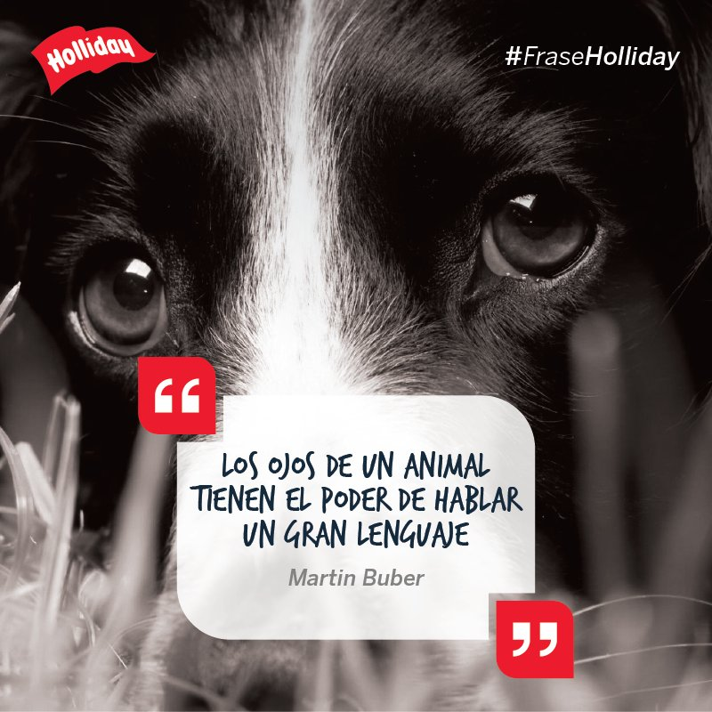 Holliday On Twitter Perros Dogslovers Mascotas Amor