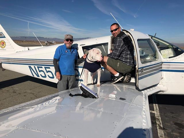 Cain a deaf, sweet boy was stuck in a CA animal shelter for months until #DeafDogsRescueOfAmerica got him out &amp; arranged  #pnp Freedom Flights to his new FL family. Cain may be deaf but he can see how beautiful his new life is. Bully for you Cain! @PetmateProducts @PamGrier<br>http://pic.twitter.com/40at7VfumY