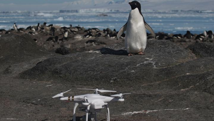 Scientists discovered a hidden 'supercolony' of 1.5 million penguins by tracking their poop from space https://t.co/BokcIwMpW4