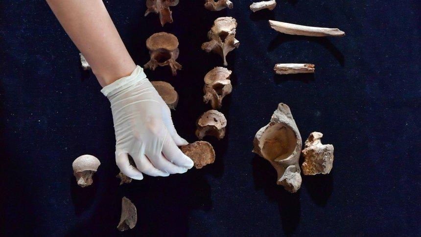 Grabhügel in Sachsen-Anhalt: Archäologen weisen ältesten Fürstenmord der Geschichte nach https://t.co/SK2Be51wTX