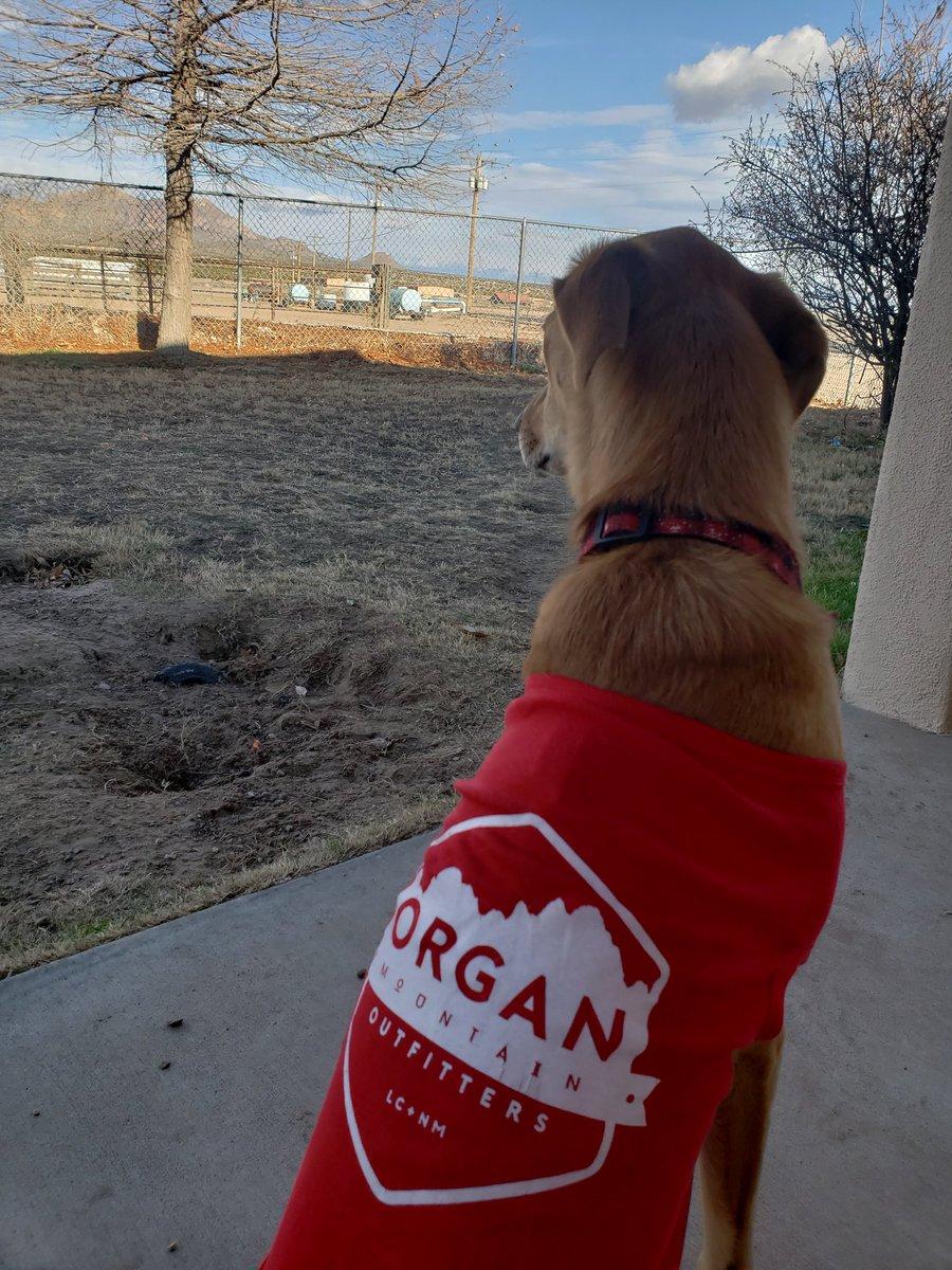 Just a puppy watching her farm. @OrganMountain #puppylove #NMtrue<br>http://pic.twitter.com/WyZQMtCn2L