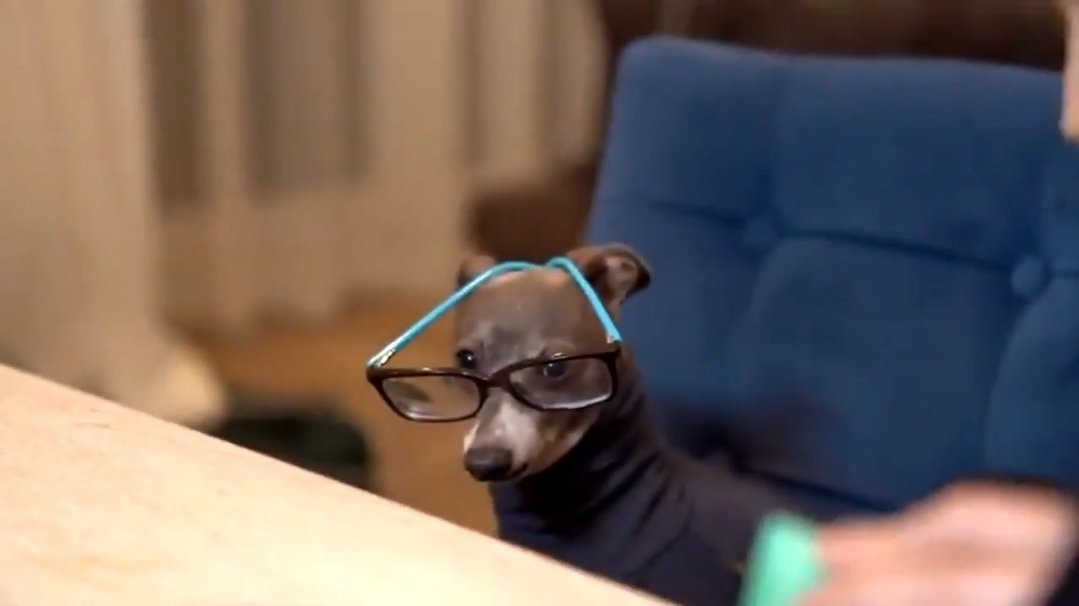 me: *reading poetry aloud to my dog* my dog: <br>http://pic.twitter.com/SA04vex8aQ