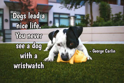 Dogs lead a nice life. You never see a dog with a wristwatch.—George Carlin #quote<br>http://pic.twitter.com/v2M76IDOSW