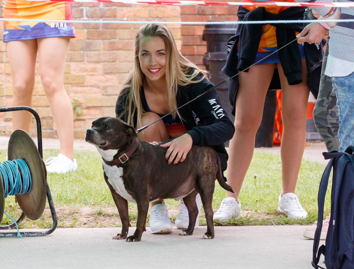 :) @Cath_Cheer22 getting distracted by this cute dog when she was mean&#39;t to be warming up for the performance :) <br>http://pic.twitter.com/tyY3iirKiw