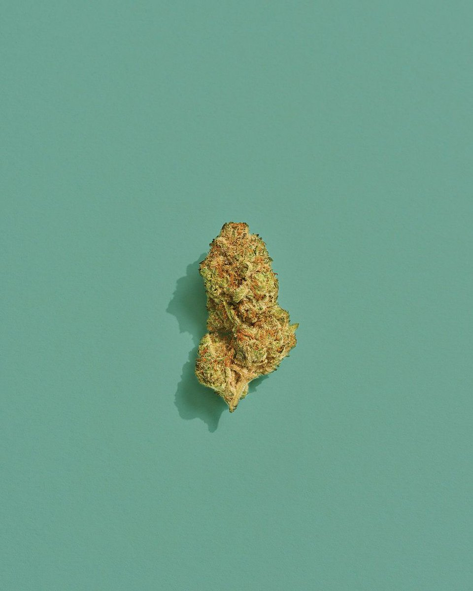 Marijuana News on Twitter: