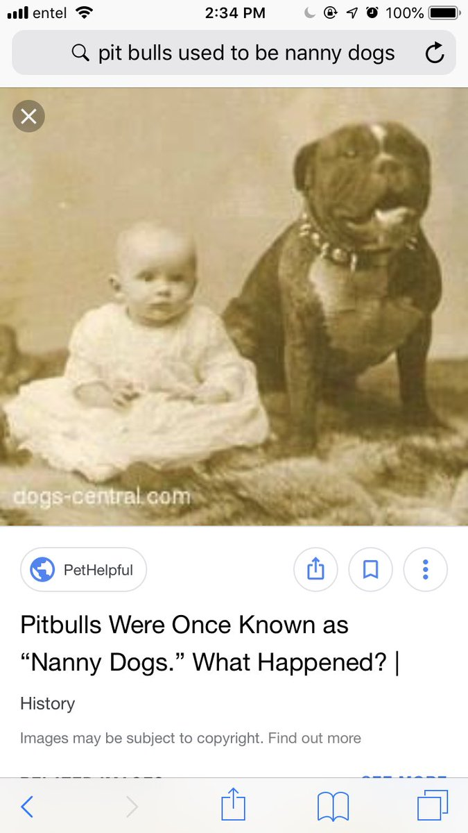 Yes, and pit bulls were literally used for babysitting kids back in the day because they are so sweet