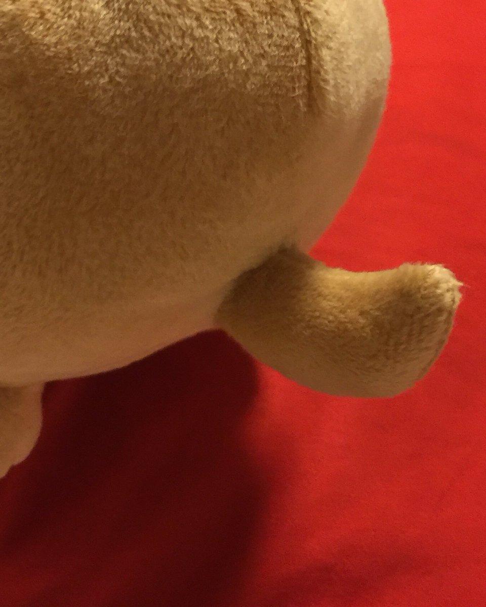 test ツイッターメディア - アニマルクッション柴犬くんが、何と私を枕難民から救出してくれました。レスキュー犬シバちゃんはこちら。  愛らしいピンク色の舌。愛らしい尻尾。 ちょっと太めロールケーキ位のまん丸ボディー。  枕として使わせて頂きます。脳ミソ空っぽな頭にしっくり。軽いから大丈夫!頑張れ!  #DAISO #枕 https://t.co/hWVINv7Ycy